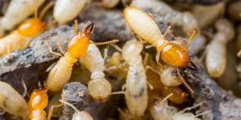 termite-deemak-control-specialist-lahore-pest-control-big-0