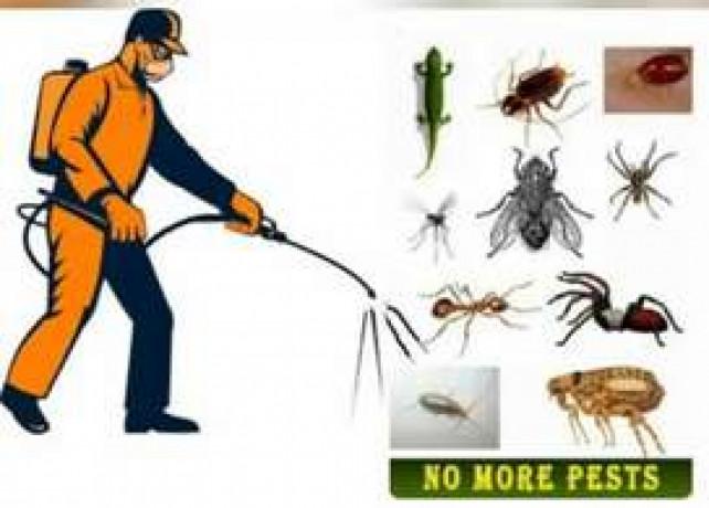 mughal-termite-control-service-pest-control-big-0