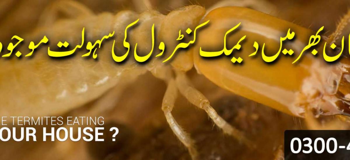 boss-termite-control-company-lahore-pest-control-small-2