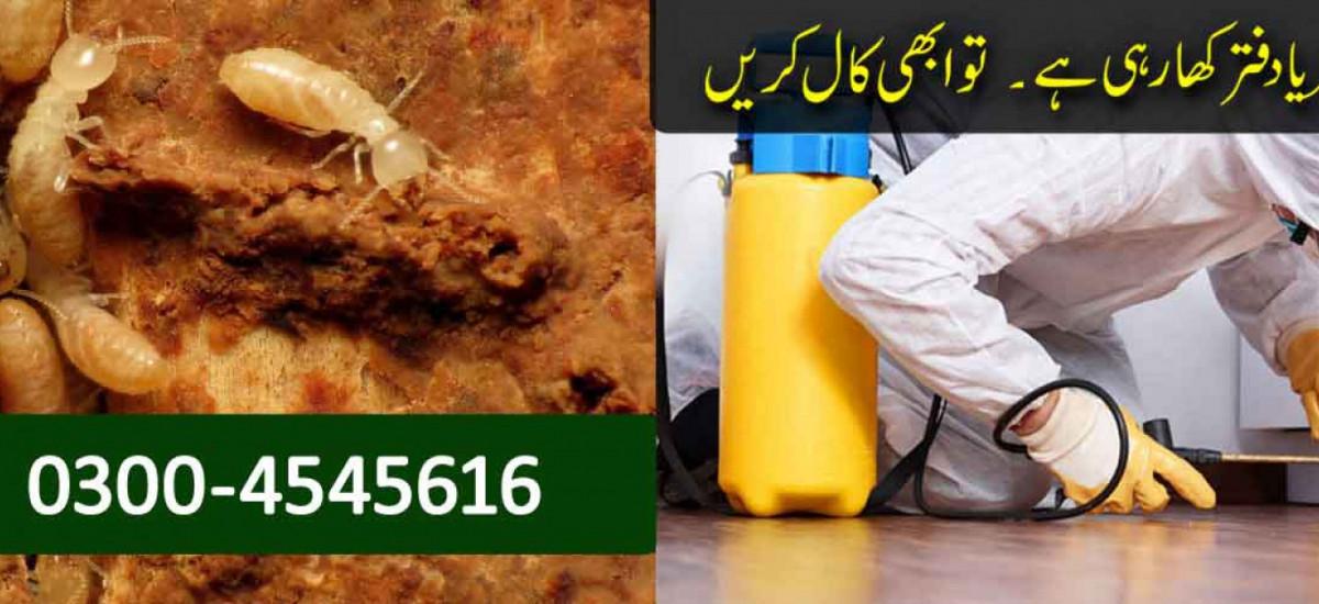 boss-termite-control-company-lahore-pest-control-small-1