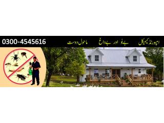 Boss Termite Control Company Lahore - Pest Control