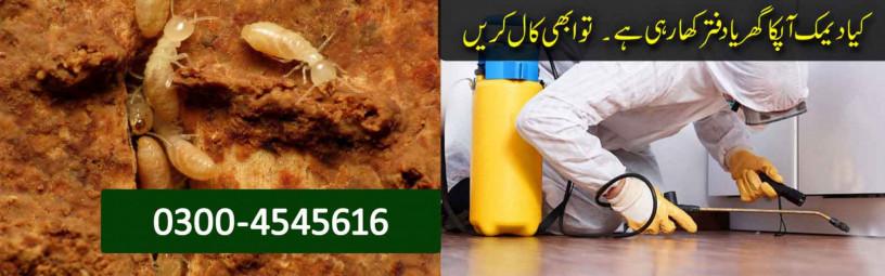 boss-termite-control-company-lahore-pest-control-big-1