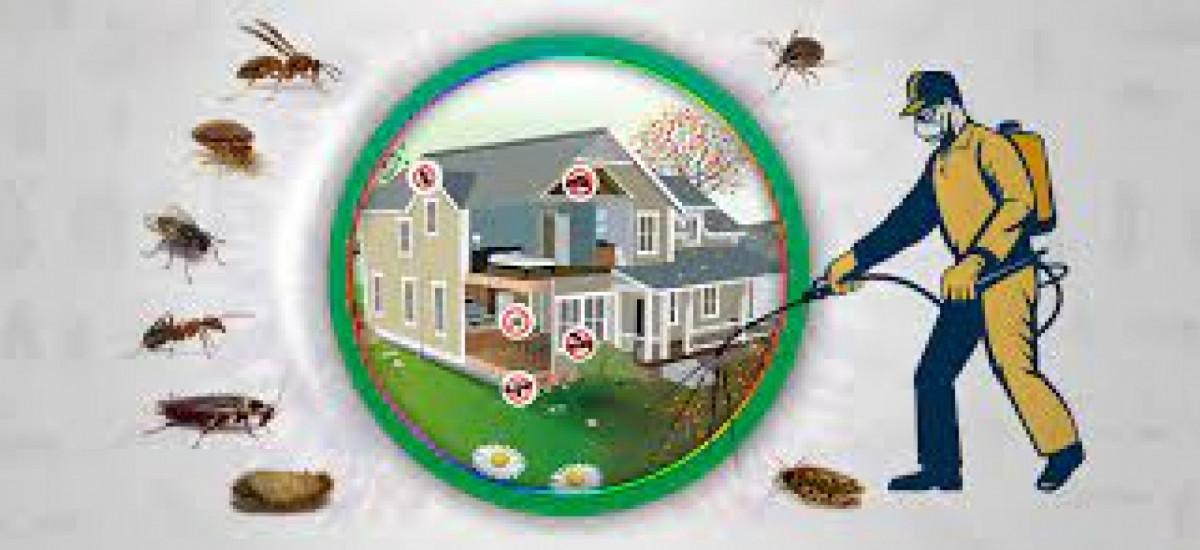 termite-control-lahore-services-pest-control-small-0