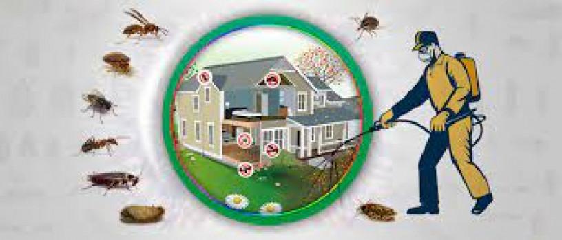 termite-control-lahore-services-pest-control-big-0