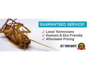 Rashid Ali Termite/Deemak/Pest Controller Lahore - Pest Control