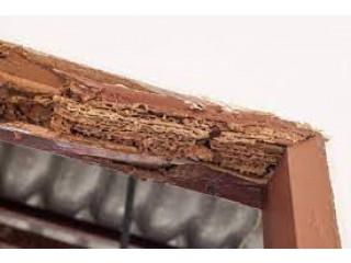 Bilal Termite & Pest Control - Pest Control